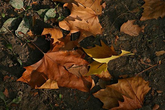 2006-10-12_001.jpg