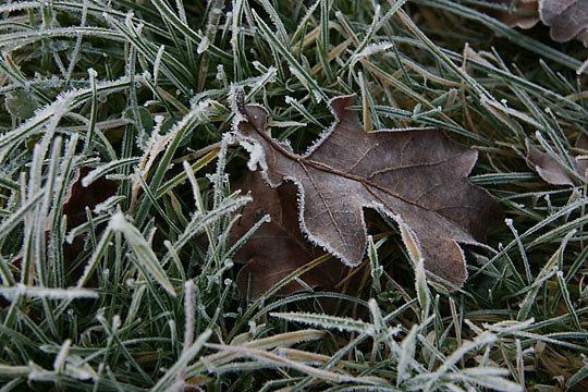 2008-01-02_001.jpg