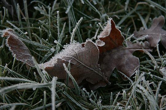 2008-01-02_004.jpg